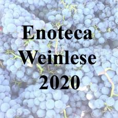 Weinlese 2020
