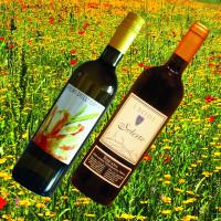 2020 Sommerweine rot und weiß