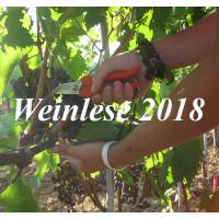 Weinlese 2018 Probierpaket